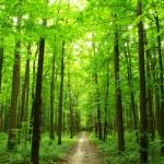 Pourquoi faut-il favoriser la biodiversité dans un jardin?