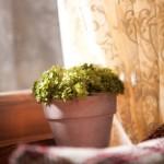 Comment aider vos plantes vertes à passer l'hiver?