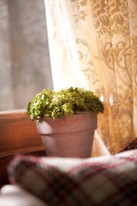 Plante verte éclairée par un rayon de soleil