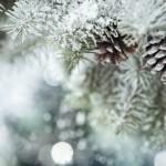 Pensez à protéger vos plantes du froid !