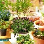 Et si vous jardiniez sur votre balcon?