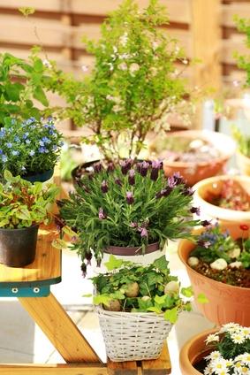 Plantes en pots sur un balcon