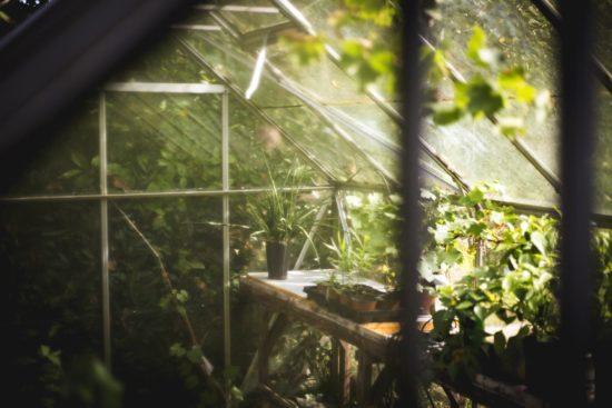 interieur serre de jardin
