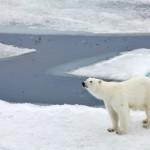 Un isolant inspiré par l'ours polaire