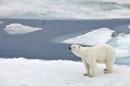 Isolation inspirée par un ours polaire