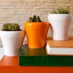 Comment bien entretenir vos plantes d'intérieur?