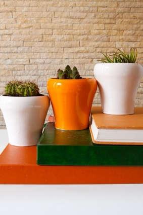 plantes vertes interieur