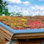 Les toitures écologiques