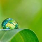 Phytoépuration: assainir les eaux usées grâce à des plantes