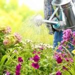 Jardin: comment bien arroser ses plantes?
