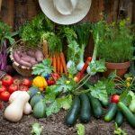 Premier potager : quels sont les légumes faciles à cultiver?