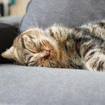 Qu'est-ce que le confort thermique?