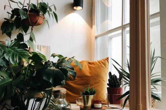 jardin interieur dans un appartement