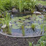 Aménager un bassin dans votre jardin