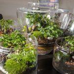 Le terrarium, un mini-jardin d'intérieur