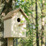 Installer un nichoir à oiseaux: quelles sont les règles à suivre?