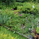 Comment optimiser naturellement votre potager grâce à des fleurs?
