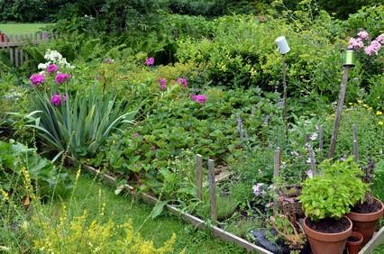 Jardin naturel avec plantes et légumes.