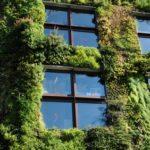 Comment créer et entretenir un mur végétal extérieur?
