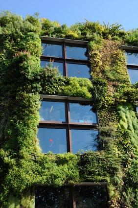 Mur végétalisé sur la façade d'un bâtiment.