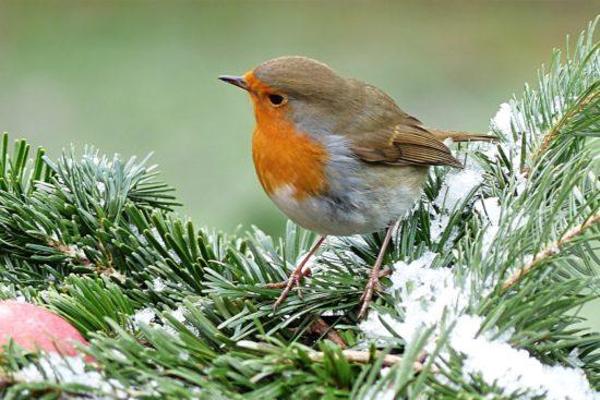Oiseau sur une branche recouverte de neige.