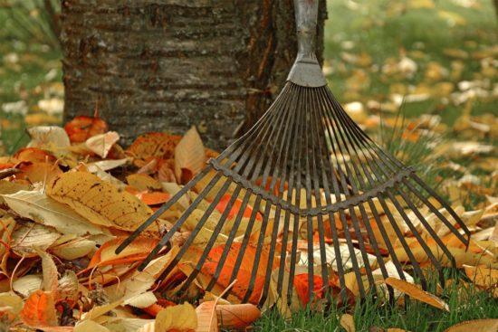 rateau avec des feuilles mortes