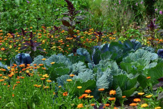 Jardin en biodynamie.
