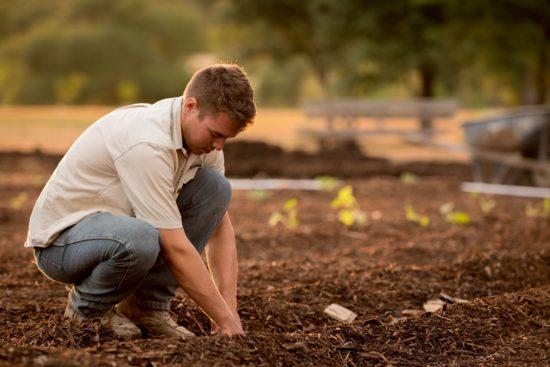 jardinier dans son potager