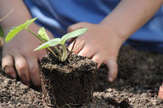 preparation des plants pour le potager