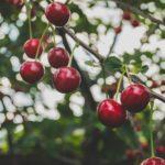 6 conseils pour jardiner en été