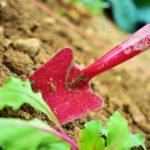 Quels sont les outils indispensables pour bien entretenir votre jardin?