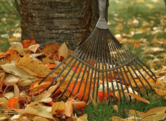 jardinage en automne