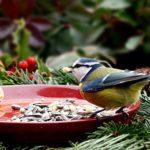 Comment bien nourrir les oiseaux en hiver?