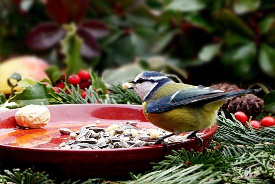 Oiseau se nourrissant en hiver.