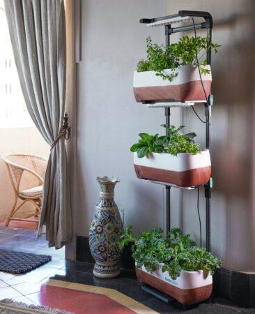 jardin vertical dans un salon