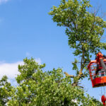 5conseils pour bien élaguer vos arbres